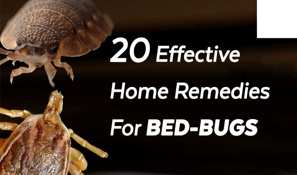 20 Effective Home Remedies For Bed-Bugs